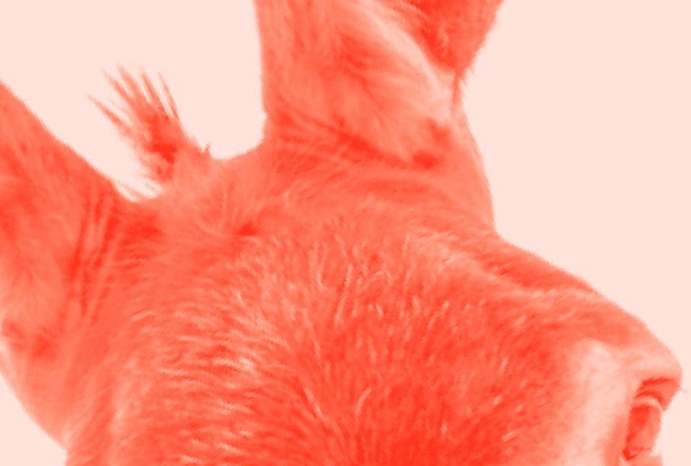 La morsure de l'âne